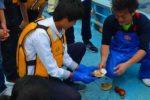 南三陸漁業体験